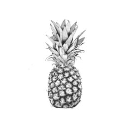 minimel_illustration-ananas