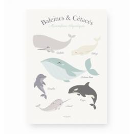 lutin-petit-pois_affiche-baleines-et-cetaces