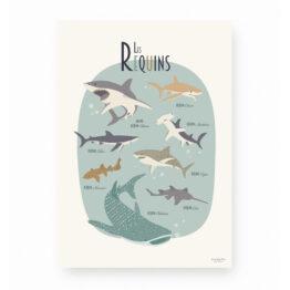 lutin-petit-pois_affiche-les-requins